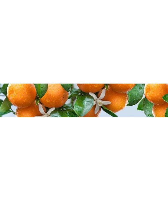 Спелые мандарины